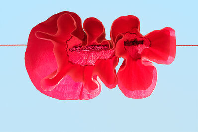 Sally Gall, 'Red Poppy', 2014