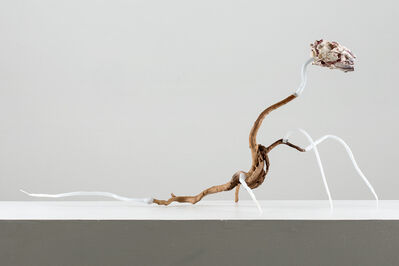 Ilya Fedotov-Fedorov, 'A creature running to cut off its head and possibly tail, from the project Museum of Poisons', 2018