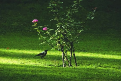 Abbas Kiarostami, 'Trees & Crows 62', 2007