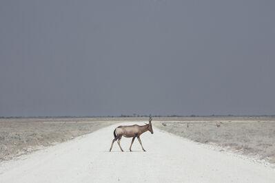 Maroesjka Lavigne, 'Antelope, Namibia', 2015