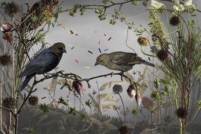 Jason DeMarte, 'Cowbirds and Cake Sprinkles', 2015