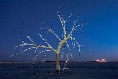 Gary Faye, 'White Tree', 2016