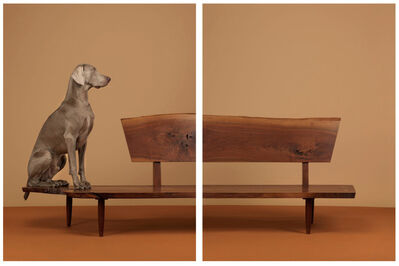 William Wegman, 'Looking Over', 2015