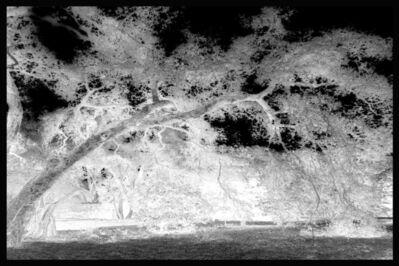 Penelope Stewart, 'Ghost Trees II', 2014