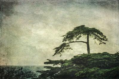 Wendi Schneider, 'Cypress, Carmel, CA', 2017