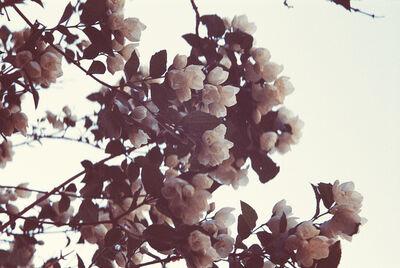 Maude Arsenault, 'Fleur de printemps 1'