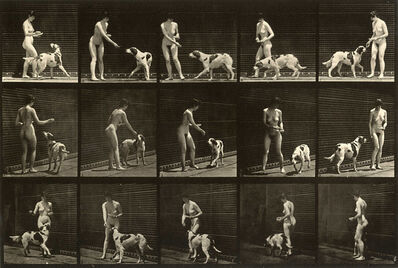 Eadweard Muybridge, 'Plate 514. Feeding a dog', 1887