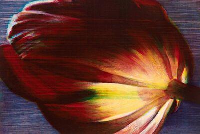 Tim Maguire, ''Flame Tulip'', 2015