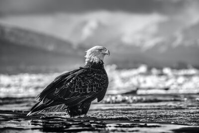 David Yarrow, 'The Bird On The Beach', 2021