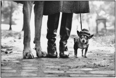 Elliott Erwitt, '18. USA. New York City. (Dog legs)', 1974