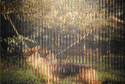 Holly Graham, 'Depictions of a Dog', 2014
