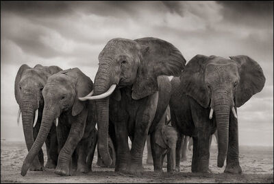 Nick Brandt, 'Elephant Five', 2008