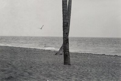 Elliott Erwitt, 'Seagull and Crossed Trees, Daytona, Florida', 1975