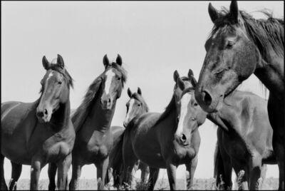 René Burri, 'Wild Horses, Argentina', 1958