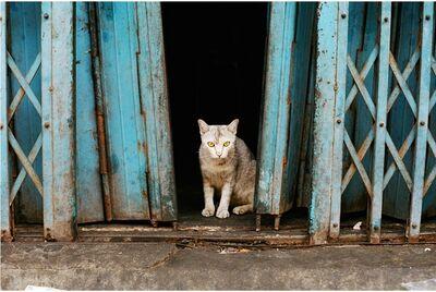 Nolan Price, 'Yangon, Myanmar Cat', 2021