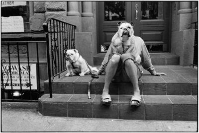 Elliott Erwitt, 'New York City, 2000 (Bulldogs)', 2000