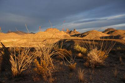 Peter Brown, 'West Texas: Ocotillo in bloom, Mule Ears Peaks, Big Bend National Park', 2006