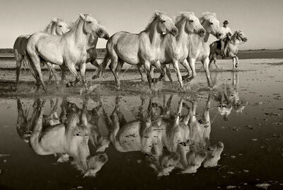 Sarah Corbin, 'Reflection of Herd'