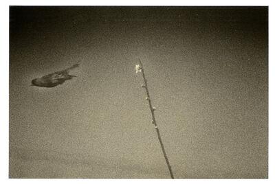 Yamamoto Masao, '1610, from Kawa=Flow', 2010