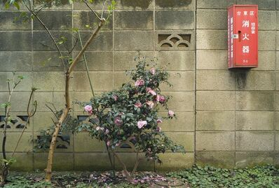 Kheng-Li Wee, 'Winter Camellias', 2011
