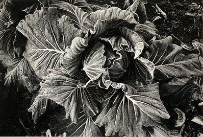 Daido Moriyama, 'Cabbage', 1989