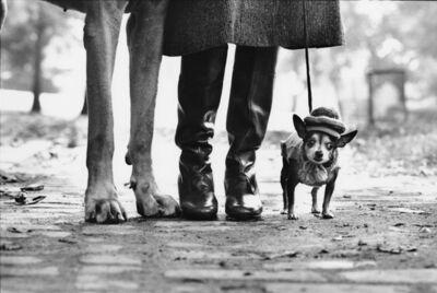 Elliot Erwitt, 'Dog Legs', NYC-1974