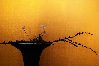 Keiichirô Muramatsu, 'soft windflower', 2017