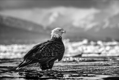 David Yarrow, 'The Bird on The Beach ', 2021