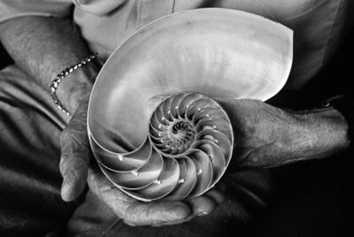 Nomi Baumgartl, 'Anatomy of Nature, Nautilus Shell, Andreas Feininger, New Milford, Connecticut', 1989