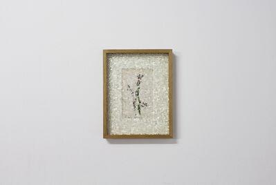 Gianluca Quaglia, 'Orchidea Vesparia', 2019