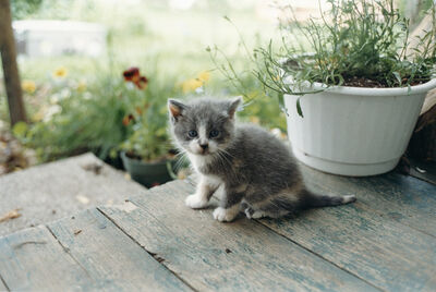 Juergen Teller, 'Kitten, Canada', 2001
