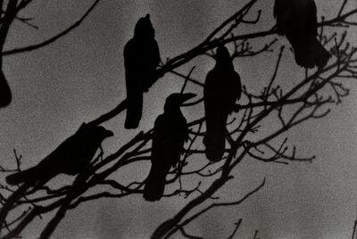 Masahisa Fukase, 'Nayoro from Ravens', 1976