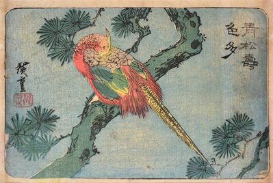 Utagawa Hiroshige (Andō Hiroshige), 'Pheasant on Green Pine Branch', ca. 1834