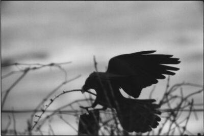Masahisa Fukase, 'Erimo Cape, 1976', 1976