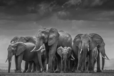 David Yarrow, 'The Circle Of Life II', 2015