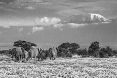 David Yarrow, 'The Garden Of Eden ', 2018