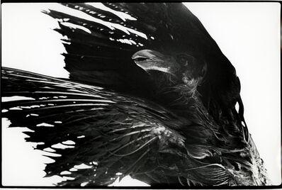 Masahisa Fukase, 'Untitled, Ravens'
