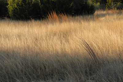 Peter Brown, 'Central Texas: Fall grasses, Pipe Creek', 2013