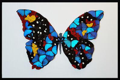 SN, 'Butterfly ', 2019