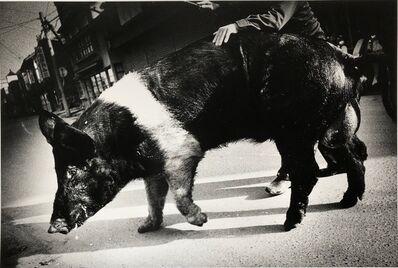 Daido Moriyama, 'Goshogawara', 1976