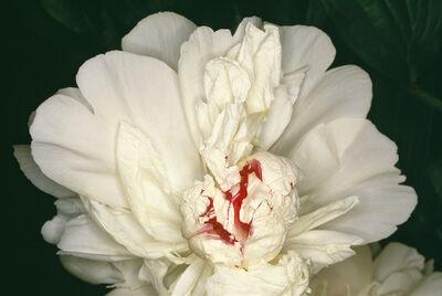 Nobuyoshi Araki, 'Flower Rondeau', 1997-2020