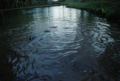 Dudu Alcón Quintanilha, 'Veo de lejos el lago, donde antes del anochecer de ayer hice algo que hace tiempo quería hacer. A la tarde antes de anochecer me metí al agua, en este lago de abajo, que es tan hermoso.', 2013