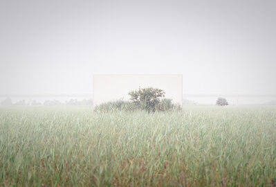 Lee Myoung Ho, 'Tree #19_2', 2021