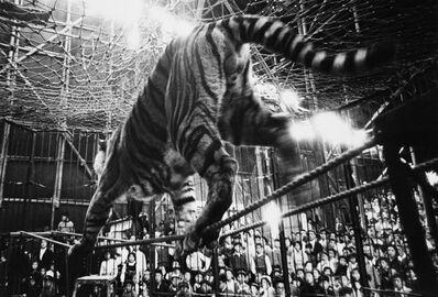 Akira Tanno, 'Tiger, Kigure Circus', 1957-vintage print