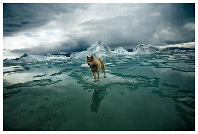 Sebastian Copeland, 'Zephyr, Artica', 2008