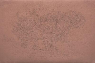 Patty Wickman, 'Manzanita', 2009-2019
