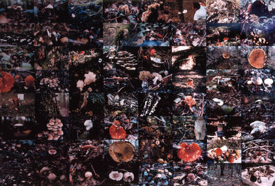 Kim Soun-Gui, 'Cueillette  des Champignons (Pick Mushrooms)', 1988-1989