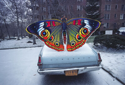 Robert Funk, 'Painted butterfly in the snow, on a trunk, on a car, on a road, in a town', 1977