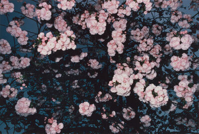 Shomei Tomatsu, 'Untitled [Tokyo], from the series Cherry Blossoms', 1980-printed 1992