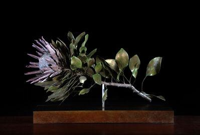 Nic Bladen, 'Protea cynaroides', 2019